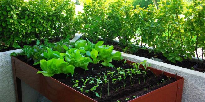 5 vegetales para cultivar en casa