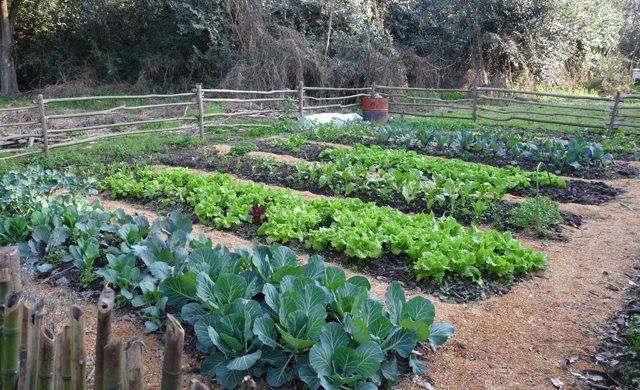 Qué sembrar en primavera: Los elegidos para tu Huerta