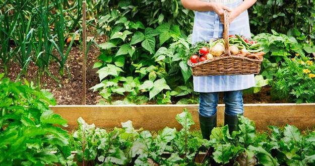 Charla taller sobre la Huerta orgánica en casa