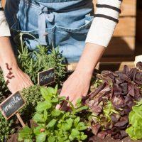 Qué es un jardín comestible?