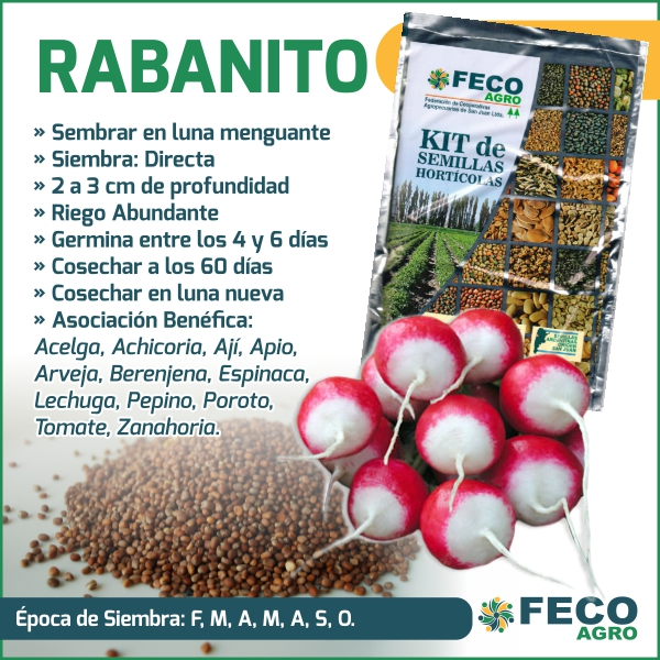 cultivo de rabanito